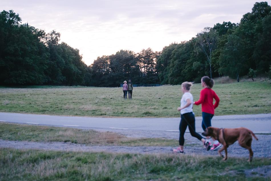 engagement stockholm djurgården