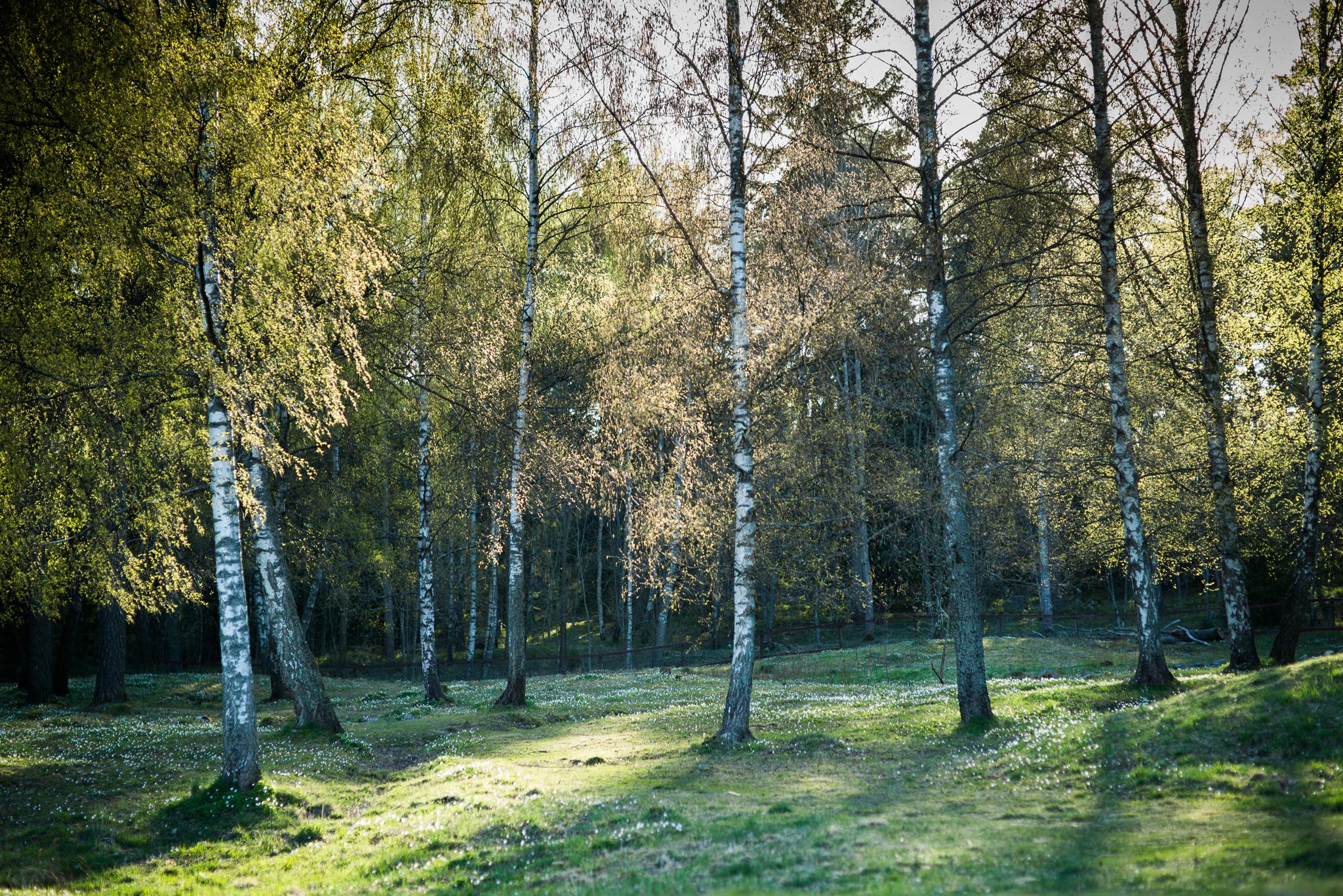 smedby hage i upplands vasby