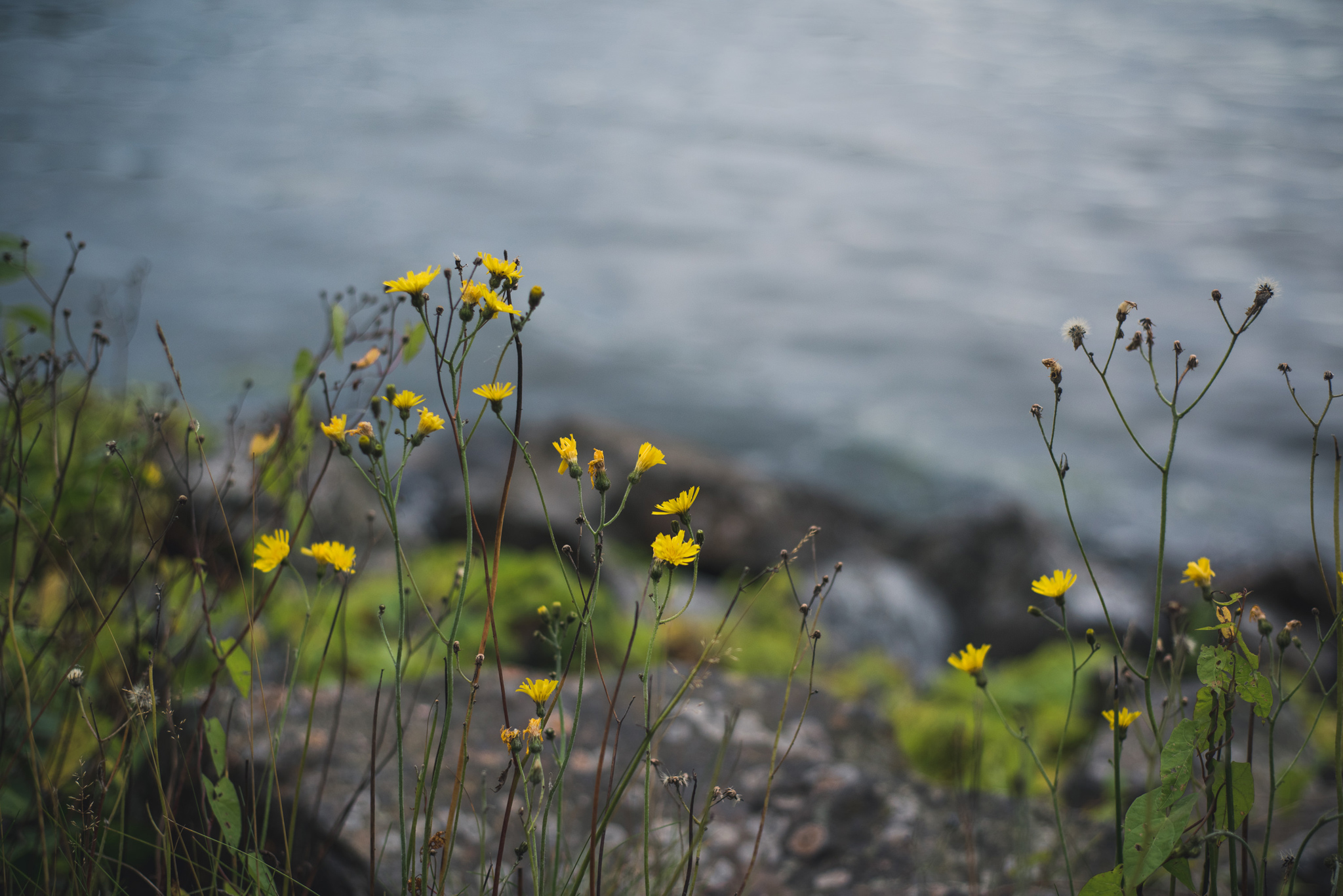 sommarens sista blommor